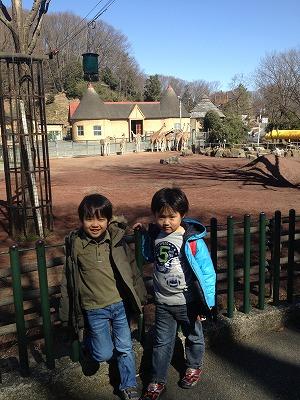 多摩動物園2013年2月